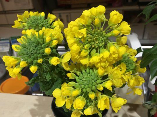 菜の花,東大阪,レーザー溶接